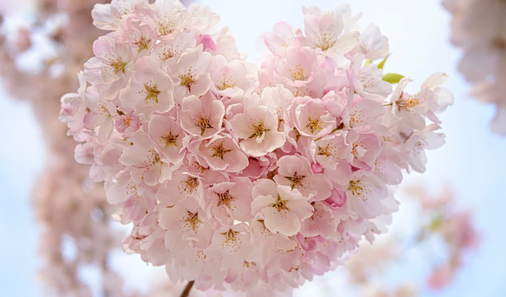 French organic brands-blossom heartshape pink flower