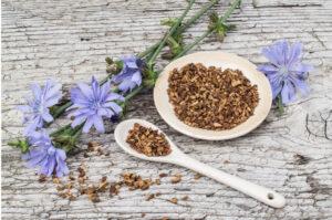 Chicory coffee ground root-chicory flowers